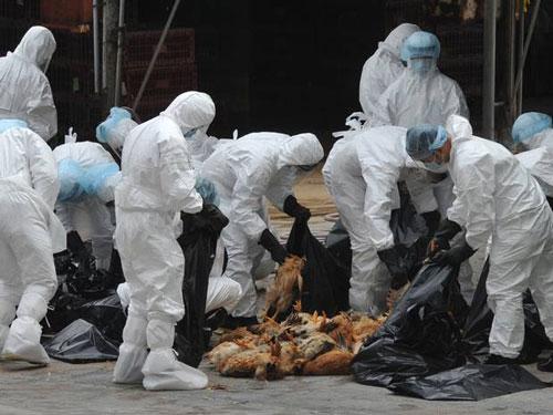 سازمان بهداشت جهانی از شیوع مجدد آنفلوآنزای پرندگان در شمال ایران خبر داد
